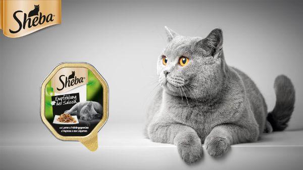 Sheba Katzenfutter Empfehlung der Saison