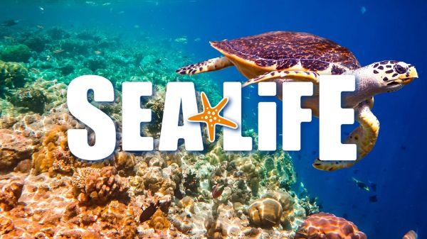 Sea Life 3€ auf den Eintritt