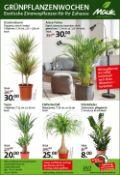 Pflanzen Mauk Prospekt
