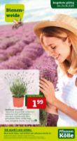 Pflanzen-Kölle Prospekt