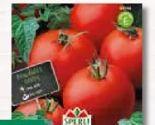 Tomaten Matina von Sperli