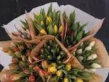 Tulpen Mono von Edeka