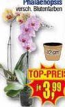 Orchideen-Topf