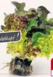 Salat Multicolor