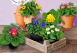 Frühlingspflanze von Garden Feelings