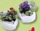 Bepflanzt Keramik Herz