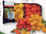 Fiestatomaten Cherry-Tomaten von SanLucar