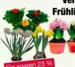 Frühlingsblüher