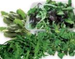 Bio Rucola-Salat