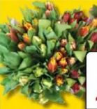 Tulpen Exklusive Sondersorten