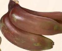 Bananen Rot