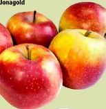 Tafeläpfel-Jonagold