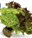 Bunte Salate von Edeka