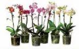 Orchideen von Krieger