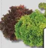 Salatspezialitäten