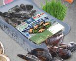 Muscheln von Wittrup Seafood