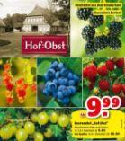 Beerenobst-Pflanzen von Hof:Obst