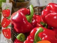 Bio-Paprika Rot