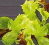 Bio Salat Mix von Rewe Bio