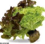 Salate mit Ballen