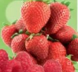 Bio Erdbeeren von Edeka Bio