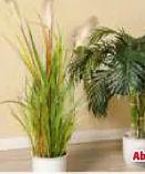 Deko-Grünpflanzen