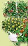 Sommerblumen-Ampel