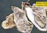 Austern Merveille de la Manche