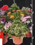 Beet-Balkonpflanzen-Mix