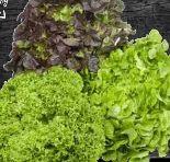 Bunte Salate