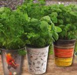 Bio Salatkräuter