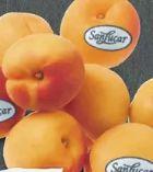 Aprikosen von SanLucar