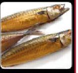 Makrelen von Fisch Kalter