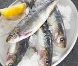 Sardinen von Frischer Fisch