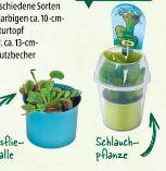 Fleischfressende Pflanze von Gardenline