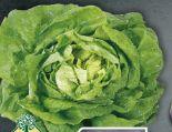 echt & gut Bio-Kopfsalat von Unsere Heimat
