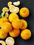 Clementinen Nadorcott