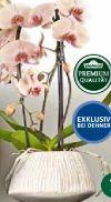 Übertopf von Dehner Premium