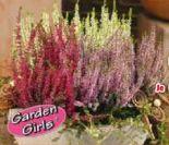 Heide von Garden Girls