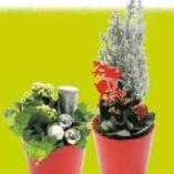 Weihnachtlich Bepflanztes Glas