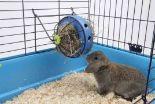 Raufe Bunny Toy von Nobby
