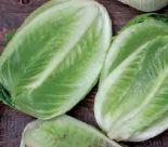 Bio-Römersalat
