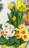 Frühlingsschale