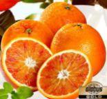 Halbblut-Orangen Tarocco von Globus Gold