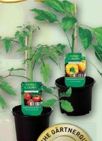 Gemüsepflanze von Finest Garden