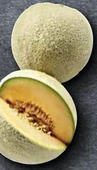 Melonen Cantaloupe