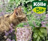 Katzenkräuter von Kölle's Bio