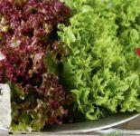 Bunte Salate von Rewe Regional