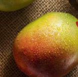 Mangos Essreif