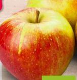 Bio-Äpfel von Gut Bio